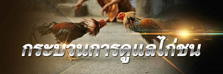 ไก่ชนไทย