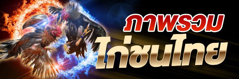 ไก่ชนในประเทศไทย